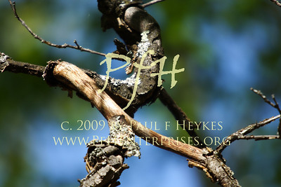 Branches - 2