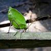 Brazil bug edit1 2008-467