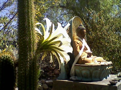 Buddha & flowering cactus, Ojai Foundation, CA
