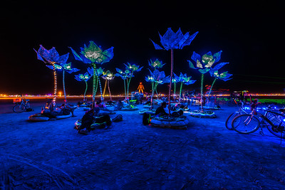 Pulse and Bloom lights up the Playa.