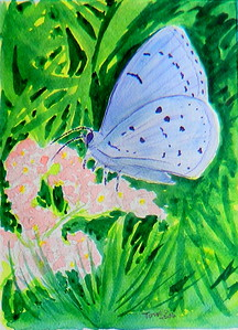 Summer Azure, 4.5x6, watercolor, march 16, 2016.