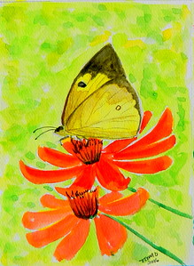 Sleepy Orange, 4.5x6, watercolor, march 16, 2016.