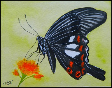 ADOPTED/Singapore - Red Helen, Papilio helenus - Malaysia, 150x115, watercolor & acrylic, may 7, 2018.Adopted by Bob Cheong, Singapore