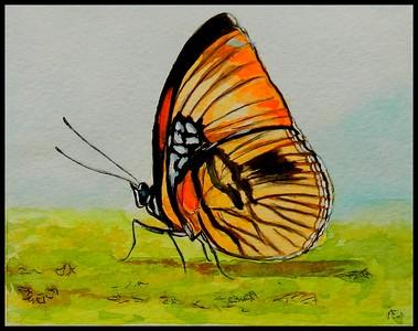 ADOPTED/Honduras - Rayed Sister, Adelpha melanthe, 150x115mm, watercolor, acrylic & ink, may 7, 2018, Robert Gallardo, Honduras.