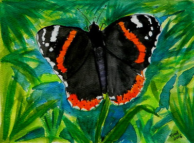 ADOPTED/USA, Illinois - Red Admiral, 4.5x6, watercolor, march 15, 2016. adopted by Pete Schmitz, Grayslake IL, july 23, 2018.