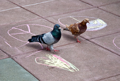 CHALK4PEACE 2008 ZEUM, San Francisco, CA 9/20/08 Pigeons 4 Peace photo: Jerry Downs