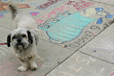 CHALK4PEACE  Oct. 24, 2010 Daniel Peacock's 6 legged furry pup with friend at EVERY PICTURE TELLS A STORY Santa Monica, CA photo: Hannah