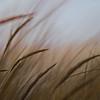 Grass115