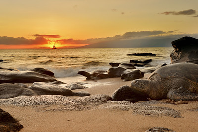 Sea Turtle, Sunset and a Sailboat