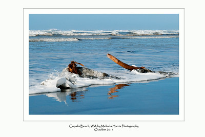 A fall surf at Copalis Beach, Washington.  Ready for your 36x24 frame