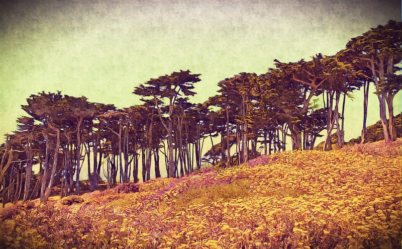 San Francisco Bay Woods