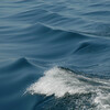 maine wave