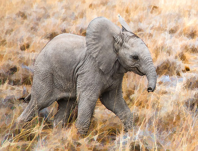 BabyElephant_D3C3933-Edit