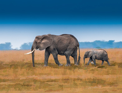 Elephants-Canvas__D3C3459-Edit