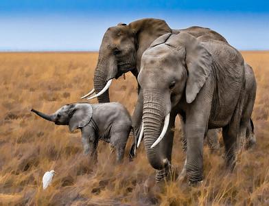 ElephantCanvas_D3C3911-Edit
