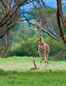 Giraffes_D3C4576-Canvas