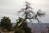 grand canyon, arizona, canyon, national park