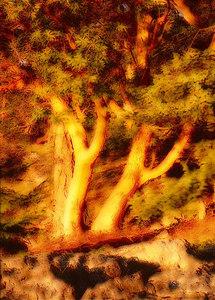Arbutus vert overlay 5x7 copy