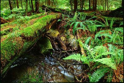 CRC forest stream 4x6 300dpi
