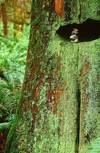 Cape Stump w stones_crp_13x12_stns24_4_top20_hladj