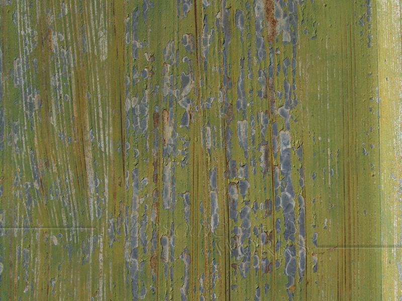 Olive Green Grunge Texture