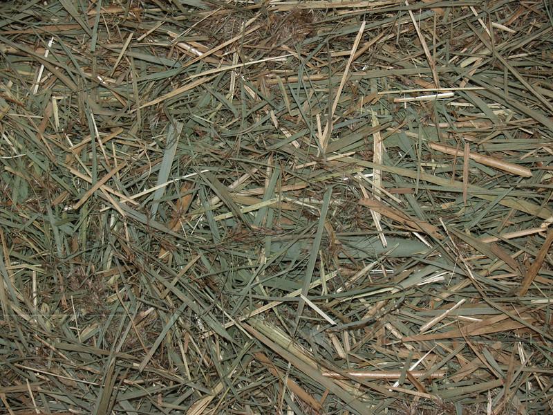 Cut grasses, Milford PA