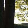 Trees, Green Lane Reservoir