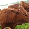 How Now, Brown Cow? : a very brown gallery