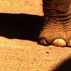 Elephant foot - San Diego Zoo