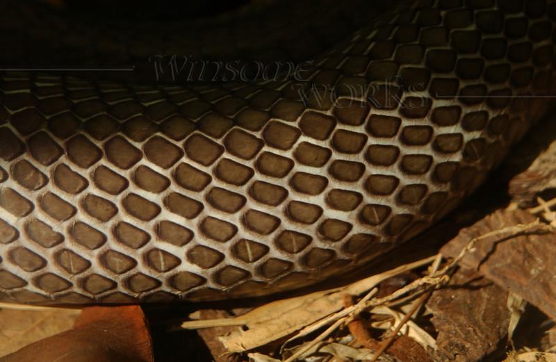 Snake in San Diego Zoo