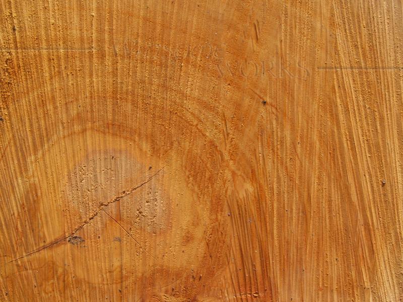 Sawn end of red oak log