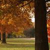 Oaks in front of Pennridge South Jr. High, Perkasie PA