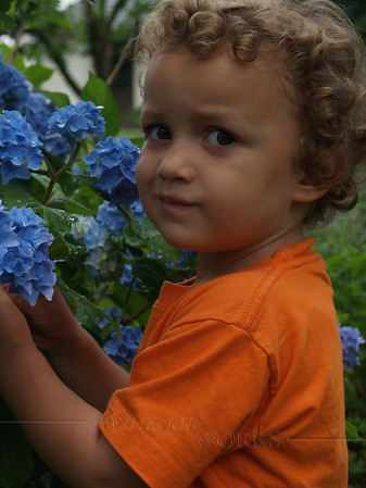 Xavier with the hydrangea