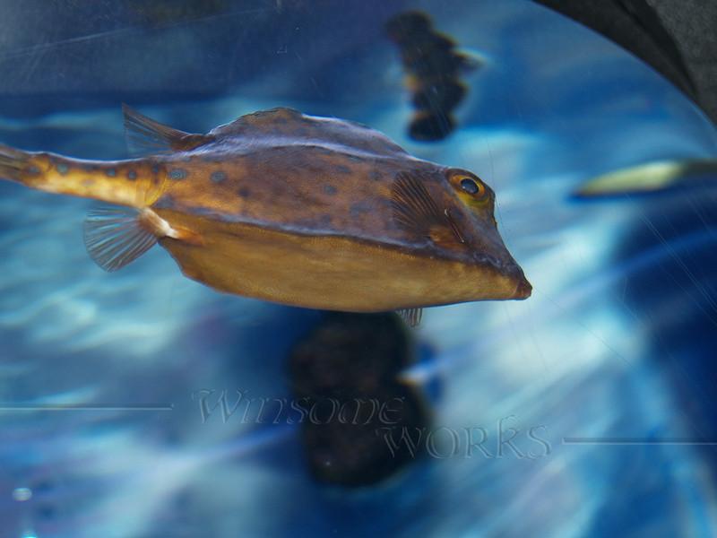 Fish at Moody Gardens Aquarium, Galveston