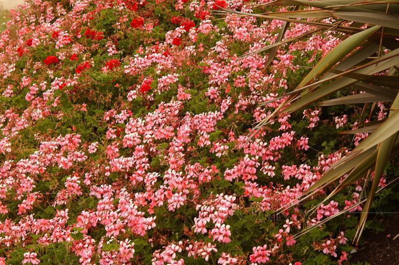 Flowers in La Jolla, CA