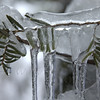 Icicles on tree - Quakertown, PA