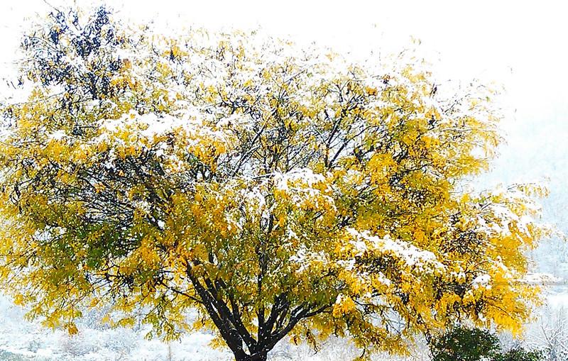 Autumn snow oddity - Halloween weekend 2011, Pennsylvania - 10/29/2011