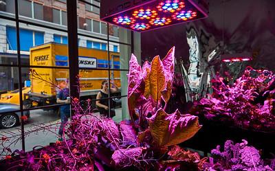 June 4, 2016- New York, New York : Meg Webster at Paula Cooper Gallery  Chelsea, NY  Credit: Robert Altman