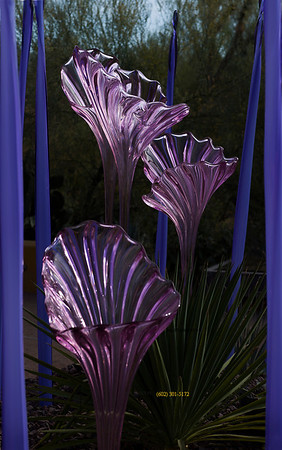 Chihuly pink glass iris purple poles 3207