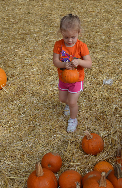 Laney making a pile of pumpkins