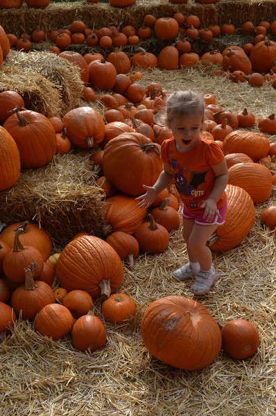 Oh my gosh, SO many pumpkins!