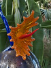 Dale Chihuly, artist.<br /> <br /> Detail of blue and orange 'blooming plant'.  (I'm afraid I didn't photograph the title placard for this one.)<br /> Conservatory, Frederik Meijer Gardens and Sculpture Park,<br /> Grand Rapids, Michigan.<br /> October 7, 2010.