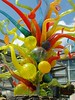 Chihuly at the Atlanta Bontanical Gardens :