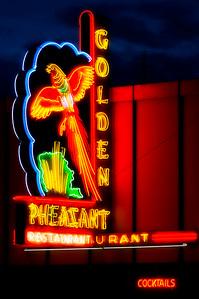 Golden Pheasant  Sunnyside, WA
