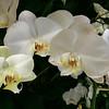 Orchids!!