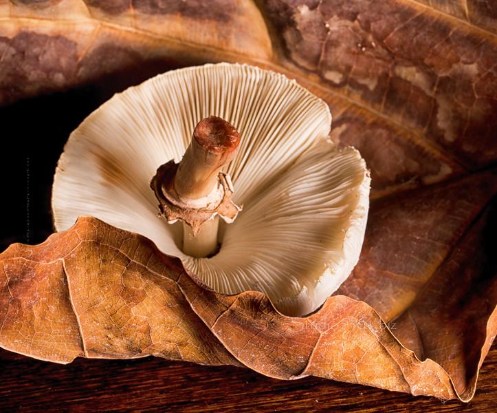 leaf mushroom texture 2958cf DEx