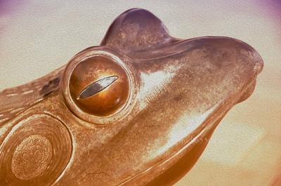 Frog oilP CF 3279