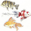 Fish, Fish Fish. So much color each and everyone one so different. Watch as they bubble and swim around so beautifully.