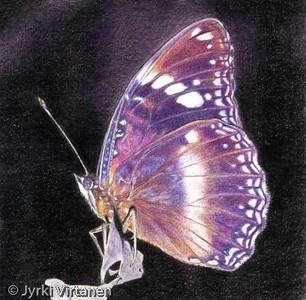 Butterfly (2001)