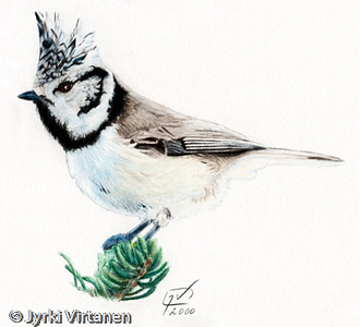 Crested Tit (2000)